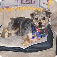 Adopt A Pet :: Beemer - Conroe, TX