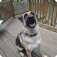Adopt A Pet :: Kylie - Green Cove Springs, FL