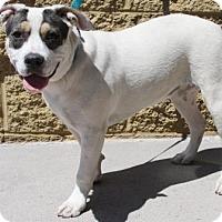 Adopt A Pet :: Gemma - Gilbert, AZ