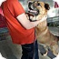 Adopt A Pet :: PETEY - MILWAUKEE, WI