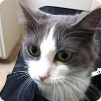 Adopt A Pet :: Miss Molly - Tustin, CA