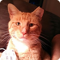 Adopt A Pet :: Big Red - Colmar, PA
