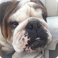 Adopt A Pet :: Cecelia(CeCe) - Park Ridge, IL
