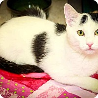 Adopt A Pet :: Scooter - Trevose, PA
