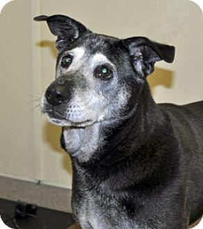 Labrador Retriever Mix Dog for adoption in Port Washington, New York - Clooney