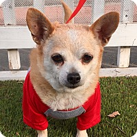 Adopt A Pet :: Mimi (BH) - Santa Ana, CA