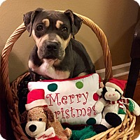 Adopt A Pet :: Tilly - Memphis, TN