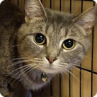 Adopt A Pet :: Lucy - Jeannette, PA