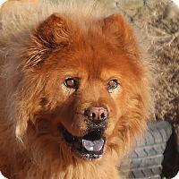 Adopt A Pet :: TITO - Eastsound, WA