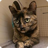 Adopt A Pet :: Lizzie - Bridgeton, MO