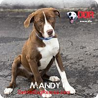 Adopt A Pet :: Mandy - St. Clair Shores, MI