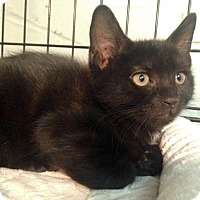 Adopt A Pet :: Zircon - River Edge, NJ