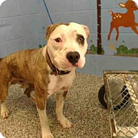 Adopt A Pet :: URGENT ON 5/2  San Bernardino - San Bernardino, CA