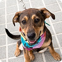 Adopt A Pet :: Ferdinana - Richmond, VA