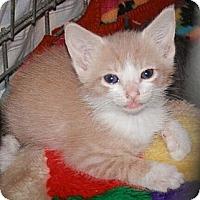Adopt A Pet :: Tracey - Reston, VA
