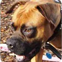 Adopt A Pet :: Phoenix - Sunderland, MA