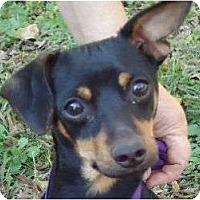 Adopt A Pet :: Smokey - Plainfield, CT