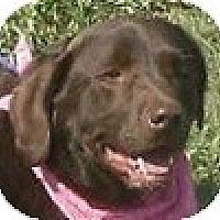 Adopt A Pet :: Mary Jane - Hamilton, ON