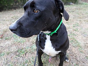 Labrador Retriever Mix Dog for adoption in Oakland, Arkansas - Mitch