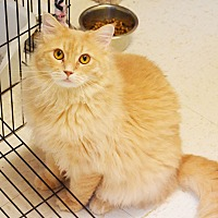 Adopt A Pet :: Payday - Lincoln, NE