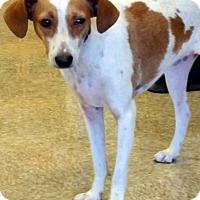 Adopt A Pet :: JACK - Winnetka, CA