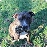 Adopt A Pet :: Libby - Shrewsbury, NJ