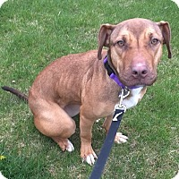 Adopt A Pet :: Orchid - North Olmsted, OH