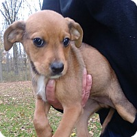 Adopt A Pet :: West - Kendall, NY