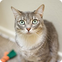 Adopt A Pet :: Mimi - North Hollywood, CA