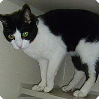 Adopt A Pet :: Sonya - Hamburg, NY