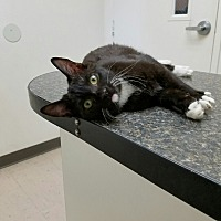 Adopt A Pet :: Jasper - Monrovia, CA