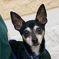 Adopt A Pet :: Onyx - Palmdale, CA