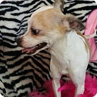 Adopt A Pet :: Judie - Crump, TN