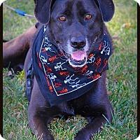 Adopt A Pet :: Barron - Liberal, KS