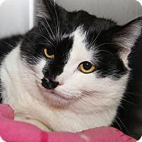 Adopt A Pet :: Fritz - Marietta, OH