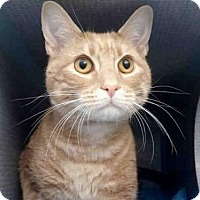 Adopt A Pet :: LEO - Pittsburgh, PA