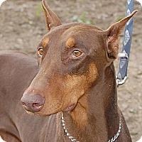 Adopt A Pet :: Reva - Sun Valley, CA