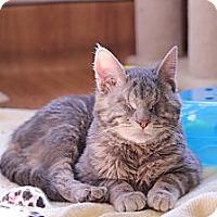 Adopt A Pet :: Thumbkin - Chicago, IL