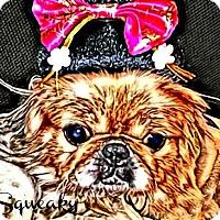 Adopt A Pet :: Squeaky-VA - Suffolk, VA
