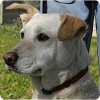 Adopt A Pet :: MEADOW - Windham, NH