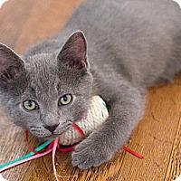 Adopt A Pet :: Humphrey - Chicago, IL