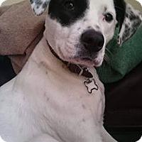 Adopt A Pet :: Dottie - Evergreen Park, IL