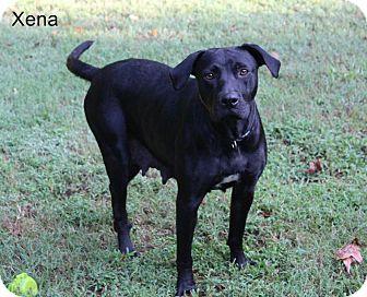 Labrador Retriever Mix Dog for adoption in Milton, New York - Xena