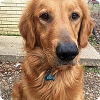 Adopt A Pet :: Nox - BIRMINGHAM, AL