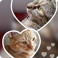 Adopt A Pet :: Gingie & Cassie! (Cocoa, FL) - New Smyrna Beach, FL
