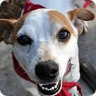 Adopt A Pet :: Ray Ray
