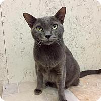 Adopt A Pet :: Bella - St. James City, FL