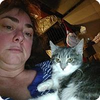 Adopt A Pet :: Sparkle - Ortonville, MI