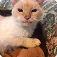 Adopt A Pet :: Mister - Toledo, OH