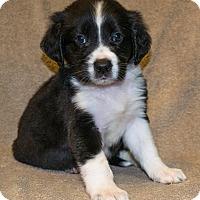 Adopt A Pet :: Wanda - Bellevue, NE